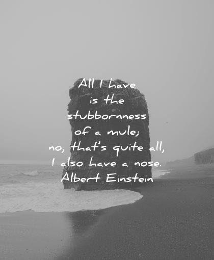 albert einstein quotes all have stubbornness mule thats quite also nose wisdom