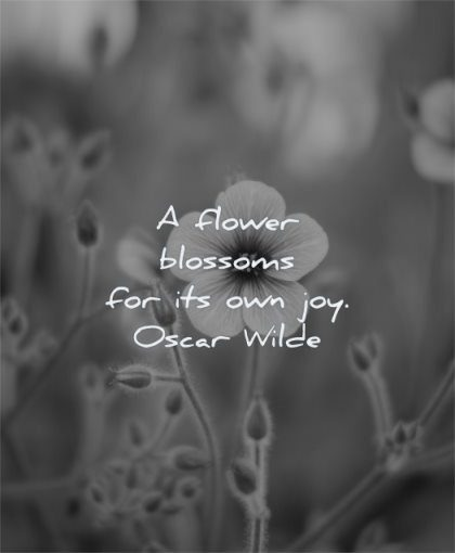 beautiful quotes flower blossoms own joy oscar wilde wisdom