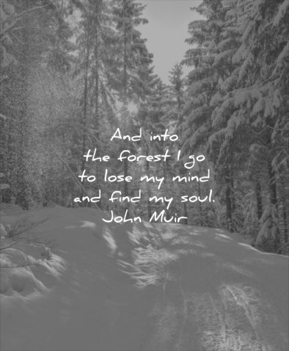 nature quotes into forest lose mind find soul john muir wisdom snow trees pines sun winter beautiful