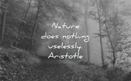 nature quotes does nothing uselessly aristotle wisdom forest