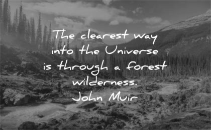 nature quotes clearest way into universe through forest wilderness john muir wisdom