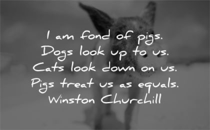 respect quotes fond pigs dogs look cats look down treat equals winston churchill wisdom