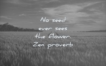 wisdom quotes seed ever seens flower zen proverb field sky clouds